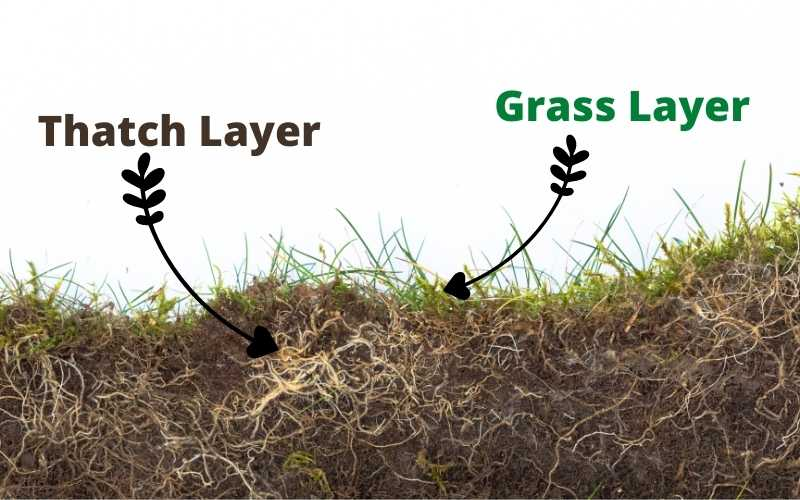 lawn structure - thatch layer
