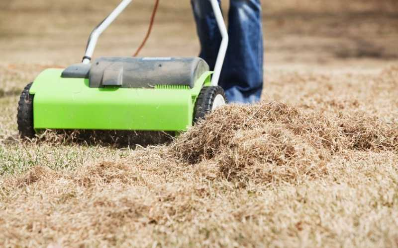 9 Best Lawn Dethatchers For Quickly Removing Thatch From Your Lawn