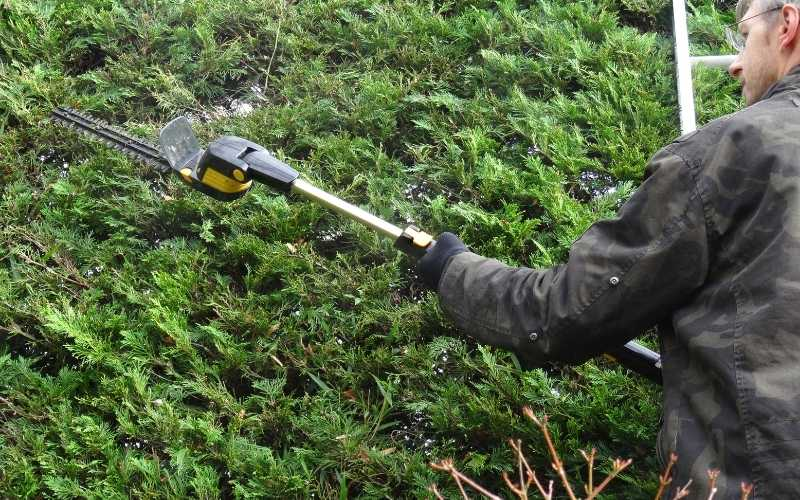the best telescopic hedge trimmers