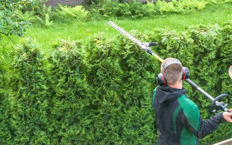 best telescopic hedge trimmer
