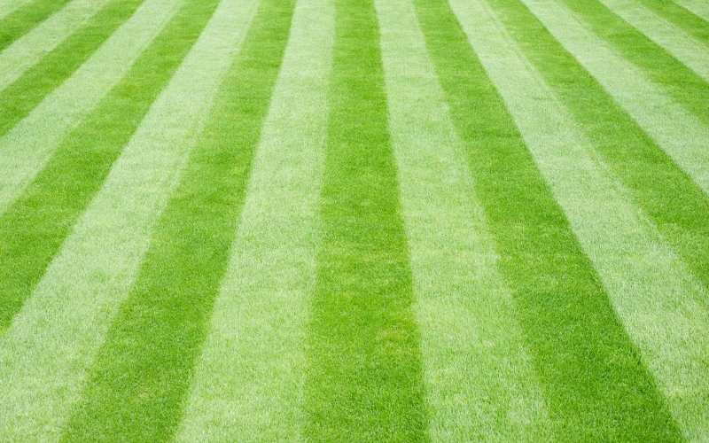 basic lawn striping pattern