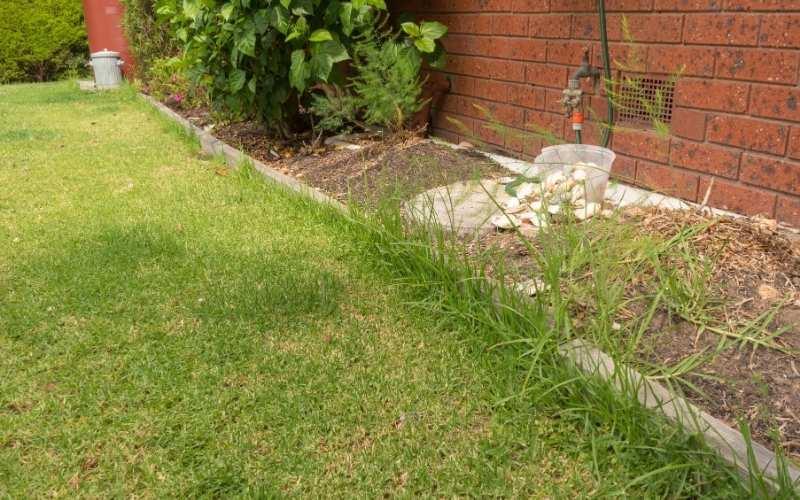 rough lawn edge